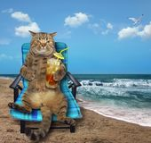 Cat with cocktail on beach royalty free stock images