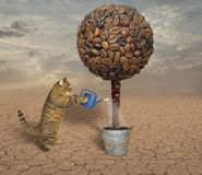 Cat and coffee tree Royalty Free Stock Photography