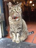 Cat in Coffeeshop at Amsterdam. Closer look of the owner. This cat is the real owner coffeeshop in Amsterdam royalty free stock photos
