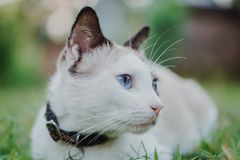 Cat With Collar Stock Images