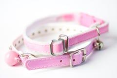 Cat collar Stock Image