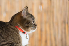 Cat collar Royalty Free Stock Images