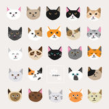 Cat collection Royalty Free Stock Images
