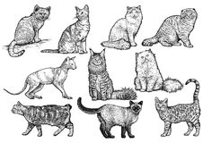 Cat collection illustration, drawing, engraving, line art Royalty Free Stock Photography
