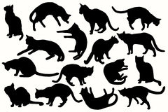 Cat collection - vector silhouette Stock Photo