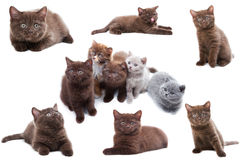 Cat collection on white background Stock Photos