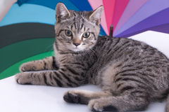 Cat on color background on white table.  Royalty Free Stock Images