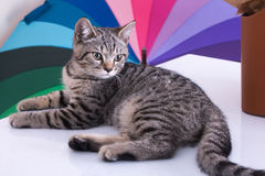 Cat on color background on white table.  royalty free stock photo