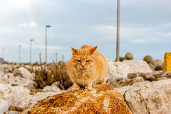 A cat of color brown on a rock. A cat of brown color on a rock in the sea port of Sesimbra (Portugal) during a rainy day Stock Image