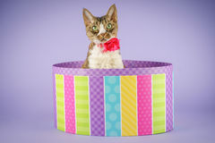 Cat in colorful box Royalty Free Stock Images