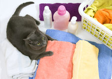 Cat on colorful laundry to wash. Funny cat on colorful laundry to wash Royalty Free Stock Images
