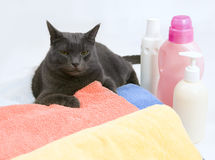 Cat on colorful laundry to wash Stock Photos