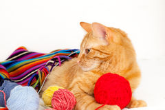 Cat with colorful wool scarf Royalty Free Stock Photography