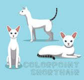 Cat Colorpoint Shorthair Cartoon Vector Illustration Royalty Free Stock Photography