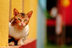 Cat colors pet consciousness animals. Cat pet consciousness royalty free stock images