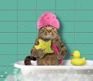 Cat with comb and bath sponge. The cat in a turban holds a comb and a bath sponge stock photography