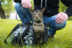 Cat comes out of the carrying case Royalty Free Stock Images