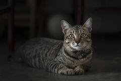 Cat. Comfortable cat on black background Royalty Free Stock Photos