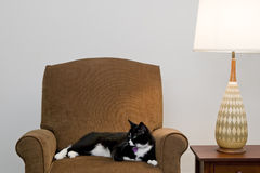 Cat on Comfortable Chair Royalty Free Stock Images