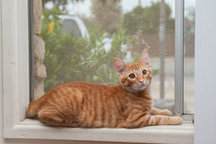 Cat comfortable in the window seat Stock Photo