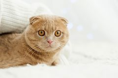 Cat comfortably settled on bed stock photos