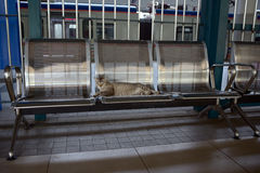 Cat on commuter train station Royalty Free Stock Photo