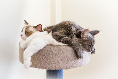 Cat Companions Stock Images