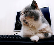 Cat on the computer Stock Photography