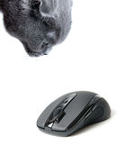 Cat and computer mouse Royalty Free Stock Photo