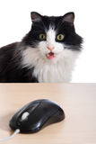Cat with the computer mouse Stock Photos