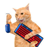 Cat with computer mouse and keyboard. stock photos