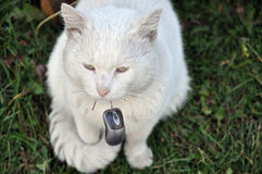 Cat and computer mouse. Royalty Free Stock Photography