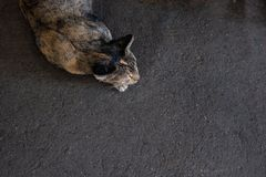 Cat and concrete road funny concept . top view stock photos