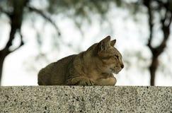 Cat  on concrete Stock Photos
