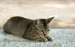 Cat  on concrete Royalty Free Stock Photos
