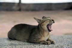 Cat on concrete seats  Stock Photo
