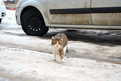 Street cat with a raised paw royalty free stock photography
