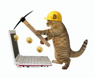 Cat in a helmet mines bitcoins. The cat in a construction helmet is mining bitcoins. White background royalty free stock image
