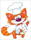 Cat the cook Stock Images