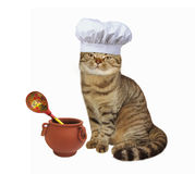 Cat cook in chef hat Stock Image