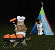 Cat with his lover on picnic. The cat cooks sausages on the barbecue grill for his lover at a picnic Royalty Free Stock Photography