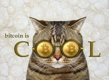 Cat in cool bitcoin glasses. The cat is wearing cool gold bitcoin glasses. Money background royalty free stock photos