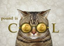 Cat in cool british pound glasses royalty free illustration