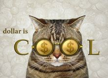 Cat in cool dollar glasses royalty free stock image