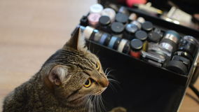 Cat and cosmetics stock video