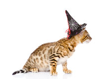 Cat in costume for a masquerade. on white stock image