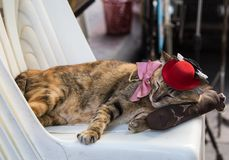 Cat with costume sleeping. Cat wearing a hat and a bow sleeping on a chair in Bangkok Thailand stock images