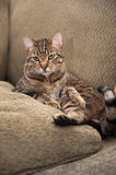 Cat on the couch Royalty Free Stock Photography