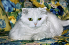 Cat on Couch Royalty Free Stock Photography