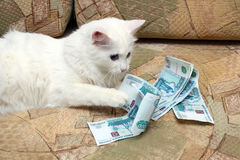 Cat count money. White cat count money on sofa royalty free stock images